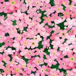 542-pink