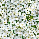 609-white