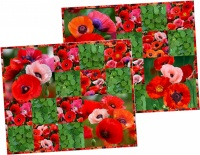 Poppies Placemats by Deborah G. Stanley